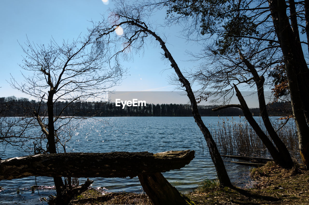 tree, nature, bare tree, lake, water, beauty in nature, branch, tree trunk, tranquility, tranquil scene, sky, scenics, outdoors, no people, day