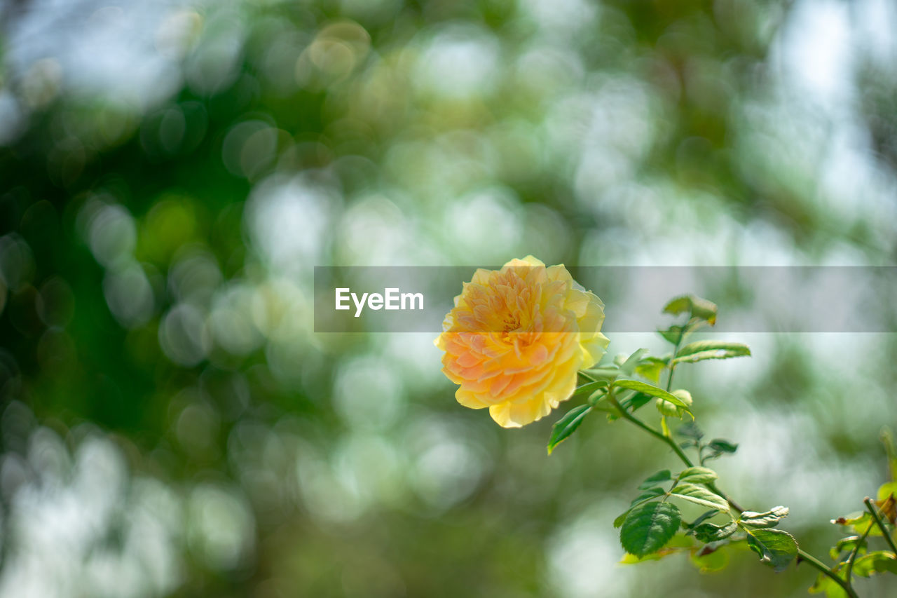 flower, plant, flowering plant, vulnerability, fragility, beauty in nature, freshness, close-up, inflorescence, growth, petal, flower head, nature, focus on foreground, day, no people, outdoors, green color, plant part, botany, pollen