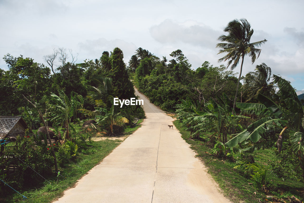 plant, tree, direction, the way forward, growth, nature, sky, beauty in nature, green color, no people, road, diminishing perspective, tropical climate, transportation, footpath, land, day, tranquility, outdoors, tranquil scene