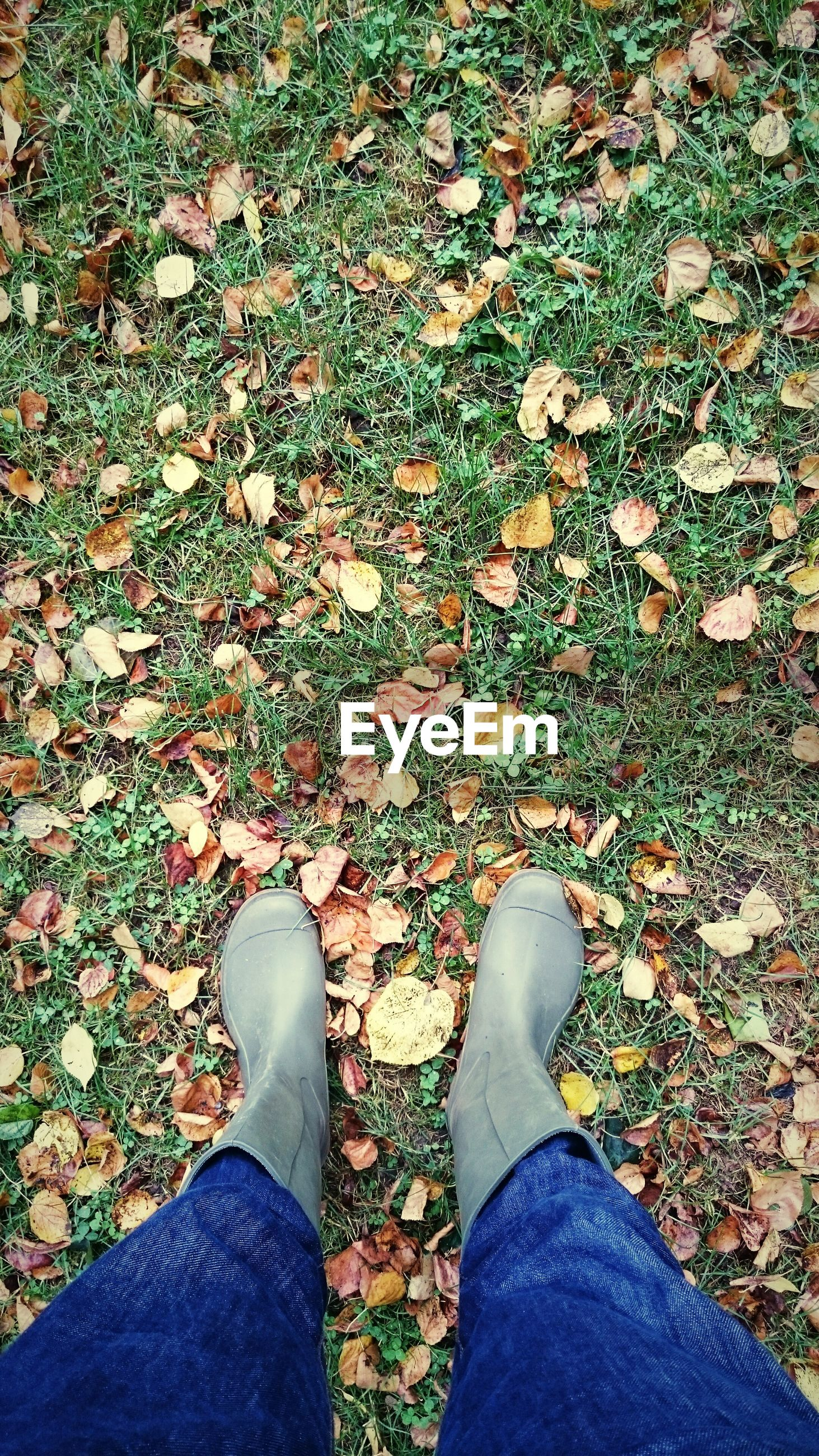 low section, human leg, autumn, standing, leaf, shoe, one person, change, real people, day, jeans, nature, outdoors, high angle view, human body part, grass, men, close-up, people