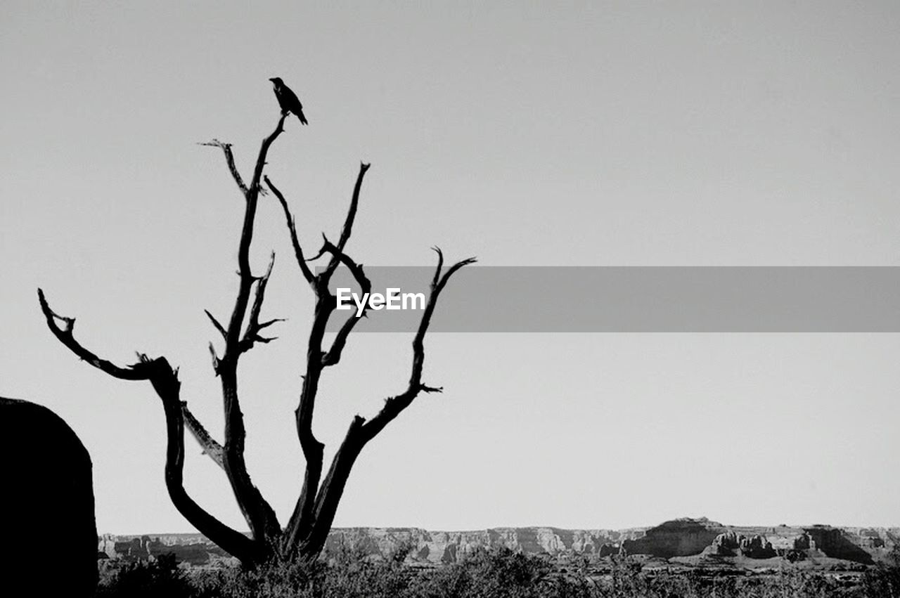 tree, plant, sky, bare tree, nature, branch, no people, bird, environment, day, scenics - nature, silhouette, outdoors, animals in the wild, vertebrate, animal themes, clear sky, animal, animal wildlife, landscape, arid climate
