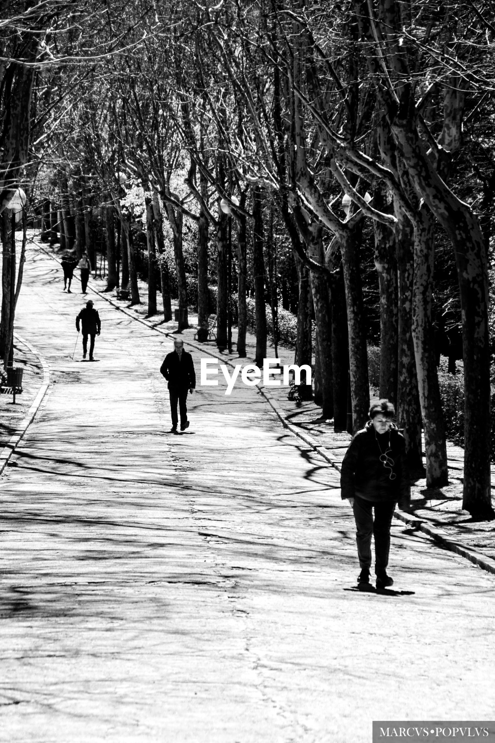 tree, real people, walking, plant, direction, nature, the way forward, lifestyles, men, group of people, day, full length, footpath, cold temperature, leisure activity, rear view, winter, people, park, city, outdoors, treelined