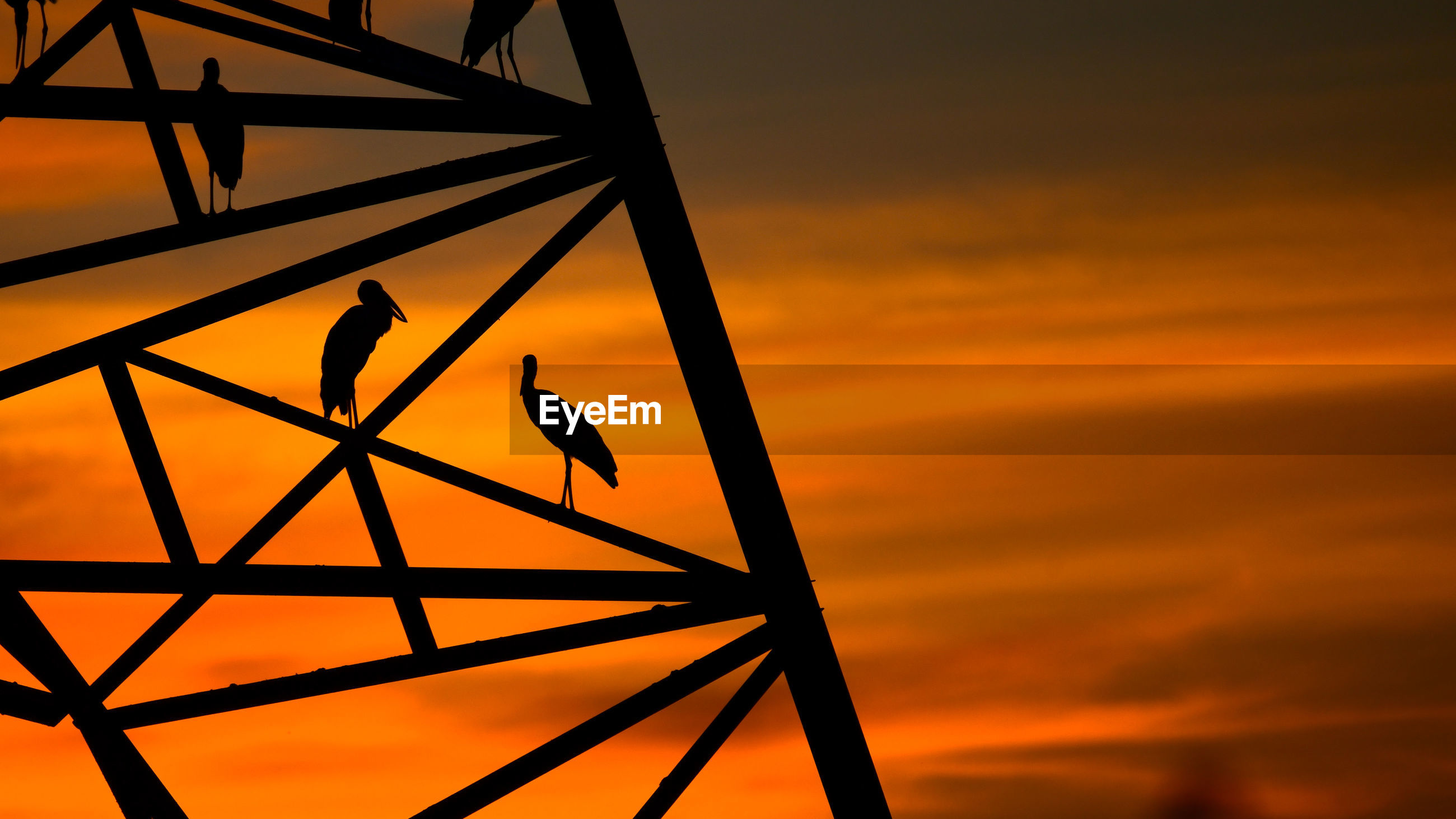 LOW ANGLE VIEW OF BIRD PERCHING ON A SILHOUETTE OF ORANGE SUNSET