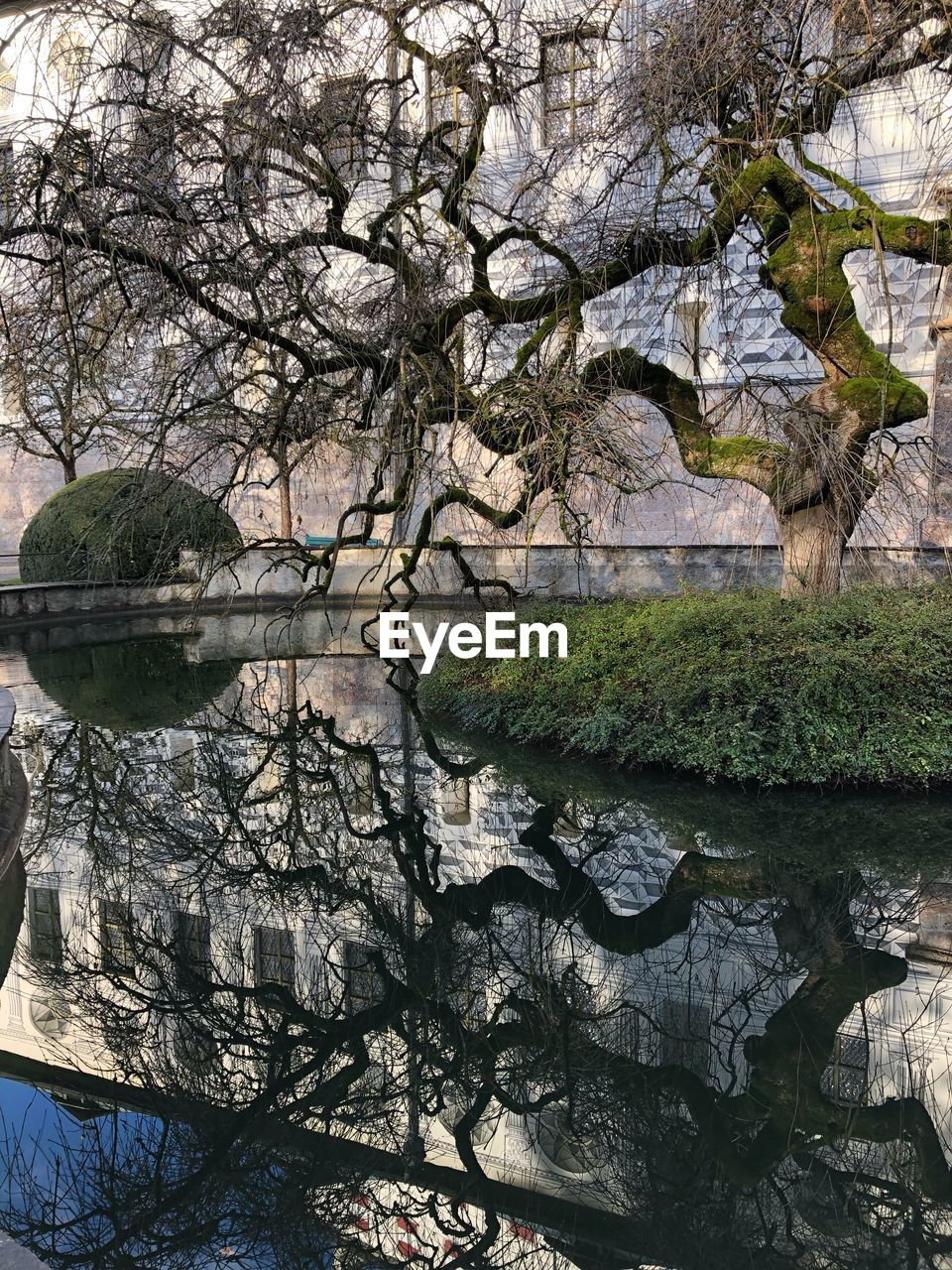 tree, water, plant, reflection, lake, nature, growth, beauty in nature, tranquility, waterfront, no people, day, branch, tranquil scene, outdoors, green color, tree trunk, land, non-urban scene