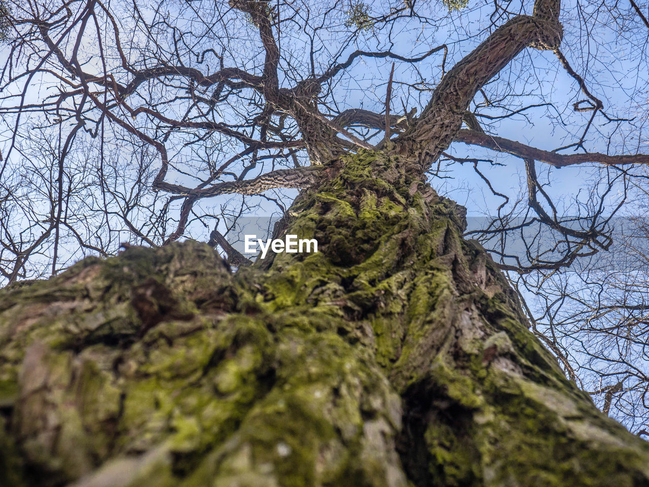 tree, low angle view, plant, bare tree, branch, moss, no people, nature, sky, tree trunk, trunk, selective focus, day, outdoors, tranquility, growth, land, clear sky, beauty in nature, textured, bark, directly below
