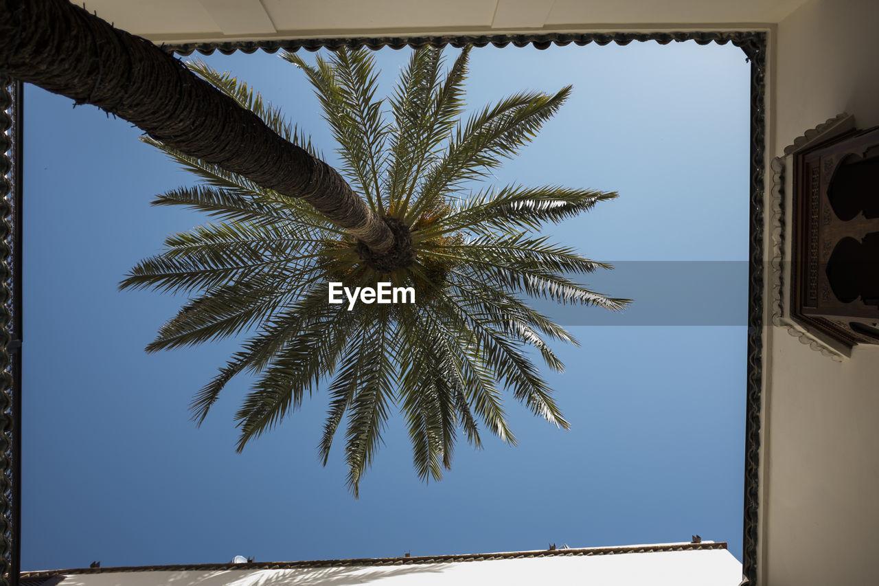Palm tree against blue sky seen from below