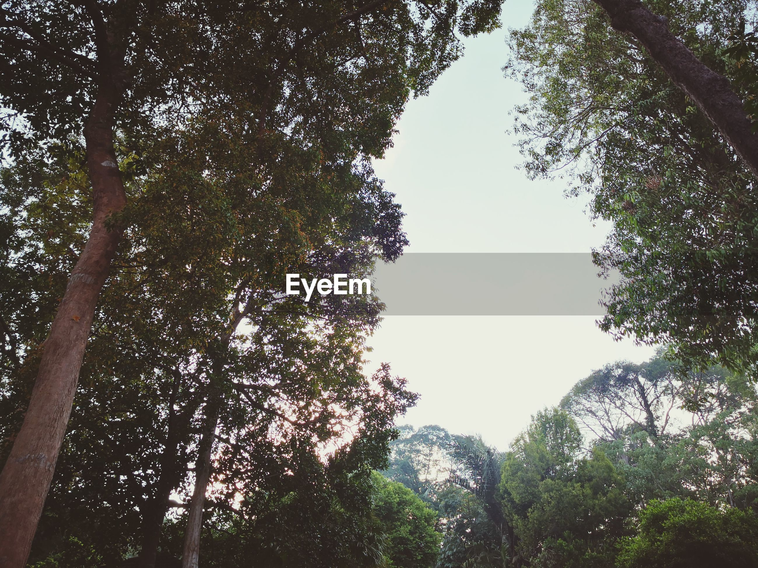 LOW ANGLE VIEW OF TREES AGAINST SKY AT FOREST