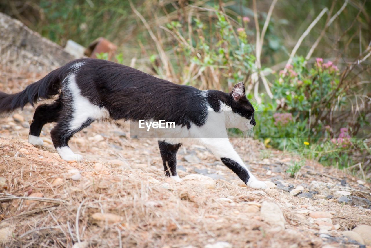 animal, animal themes, mammal, one animal, domestic, domestic animals, pets, cat, no people, domestic cat, vertebrate, black color, nature, full length, side view, plant, day, feline, land, outdoors, profile view