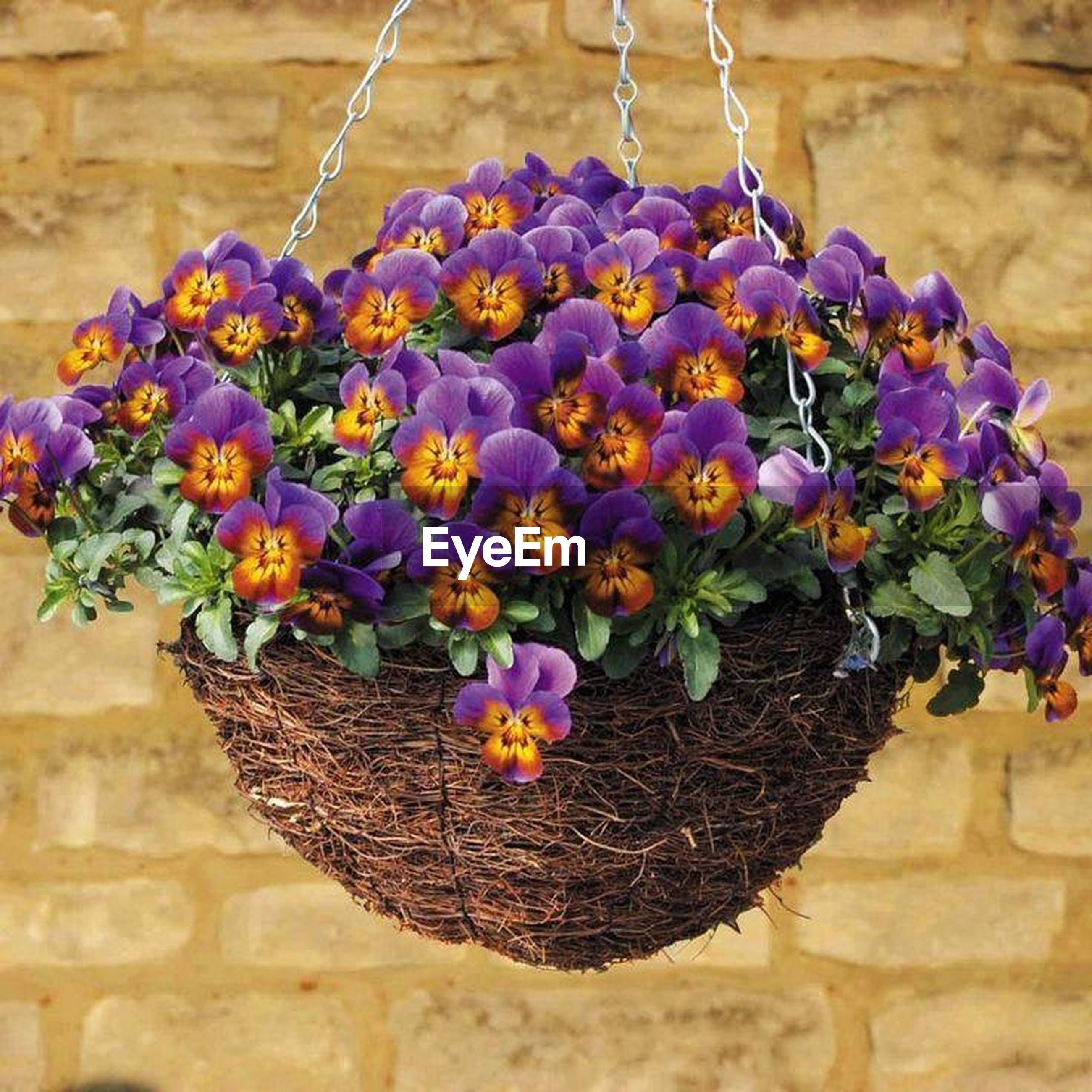 flower, freshness, fragility, plant, petal, growth, purple, multi colored, beauty in nature, wall - building feature, decoration, nature, blooming, stone wall, variation, day, wood - material, outdoors, no people, potted plant