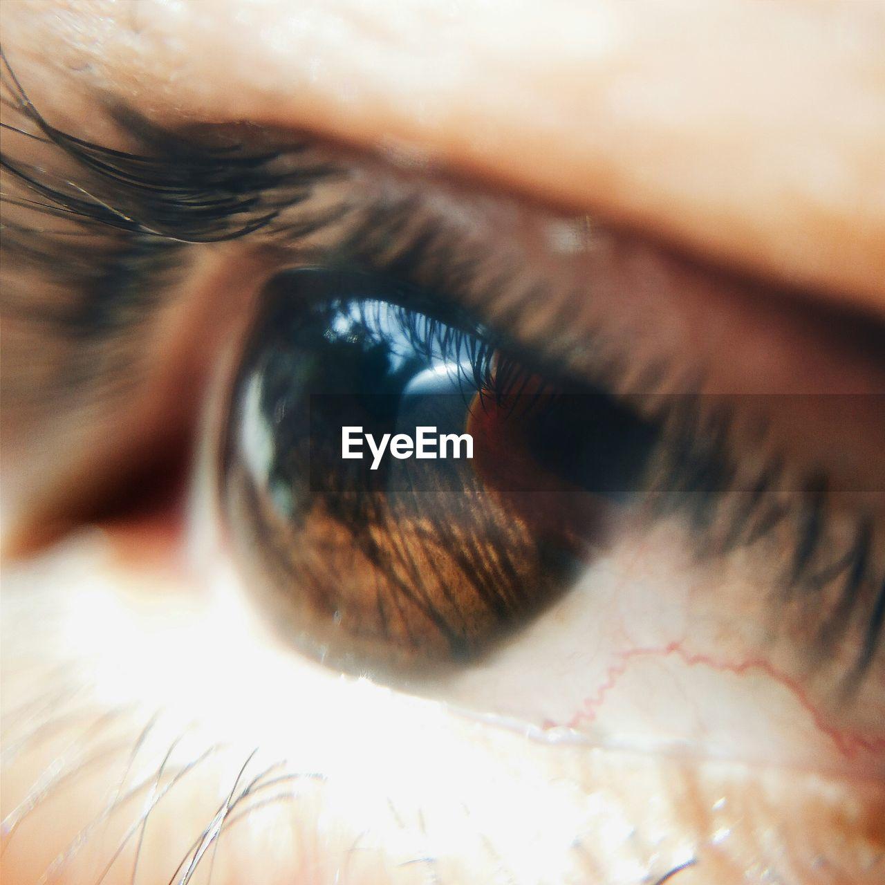 human eye, eyelash, sensory perception, human body part, eyesight, eyeball, one person, real people, macro, close-up, iris - eye, vision, full frame, iris, indoors, portrait, day, people