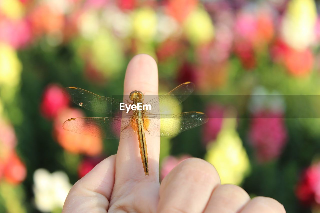 invertebrate, insect, human hand, animal, human body part, animals in the wild, real people, animal wildlife, one animal, animal themes, close-up, hand, finger, focus on foreground, human finger, body part, animal wing, one person, unrecognizable person, day, outdoors