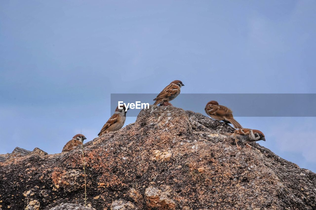 animal themes, animal, vertebrate, animals in the wild, rock, low angle view, animal wildlife, sky, rock - object, bird, group of animals, solid, nature, day, no people, perching, two animals, blue, clear sky, outdoors