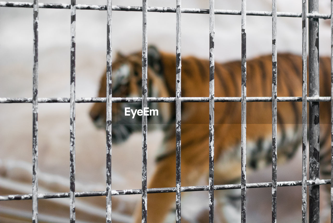 metal, focus on foreground, safety, no people, full frame, close-up, pattern, protection, security, fence, backgrounds, day, boundary, barrier, outdoors, net - sports equipment, design, sport, nature, grid