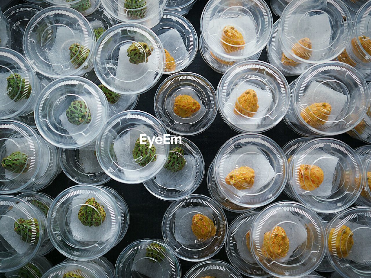 High Angle View Of Frogs In Plastic Containers In Pet Shop