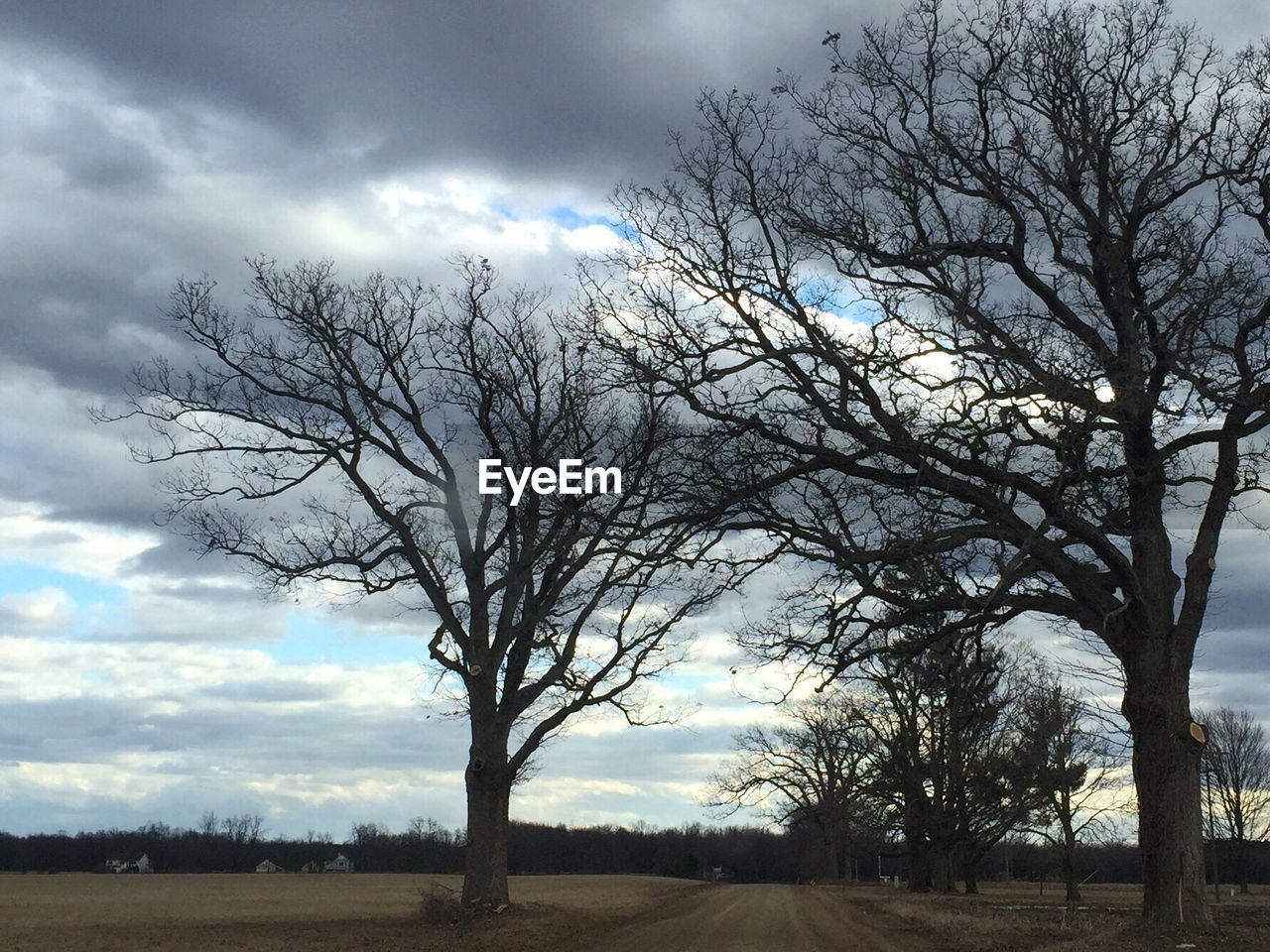 tree, bare tree, beauty in nature, nature, cloud - sky, landscape, sky, tranquility, scenics, branch, tranquil scene, day, no people, outdoors