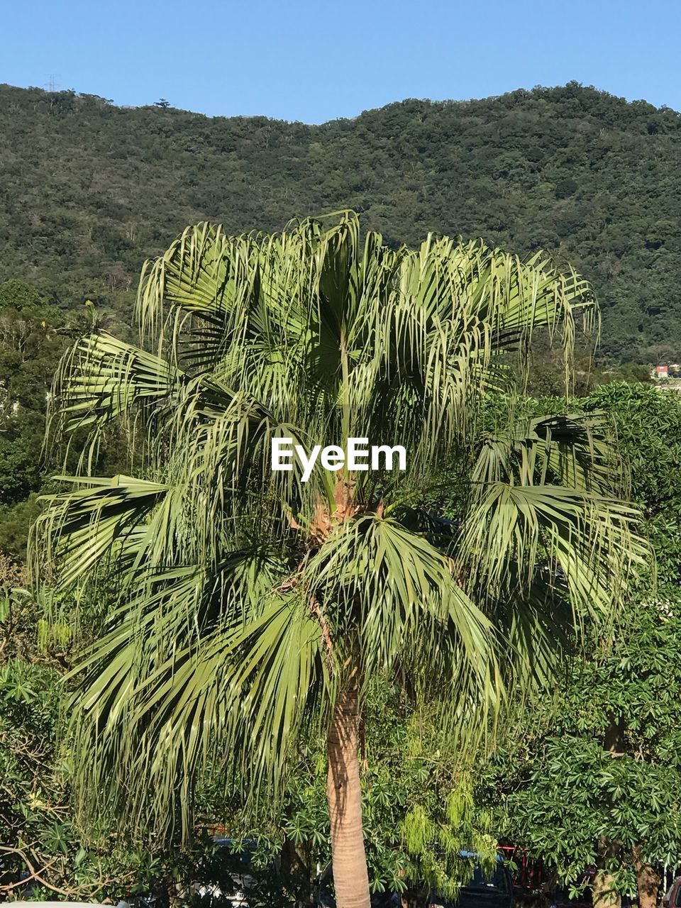 growth, nature, palm tree, beauty in nature, tree, tranquility, outdoors, day, green color, tranquil scene, scenics, no people, field, landscape, mountain, plant, sky
