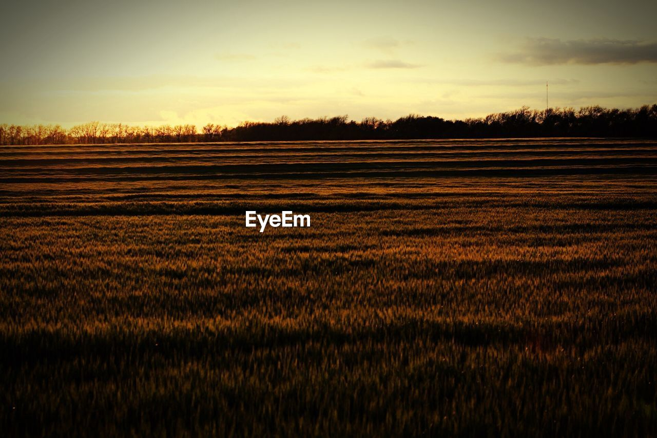 FIELD AGAINST SKY DURING SUNSET
