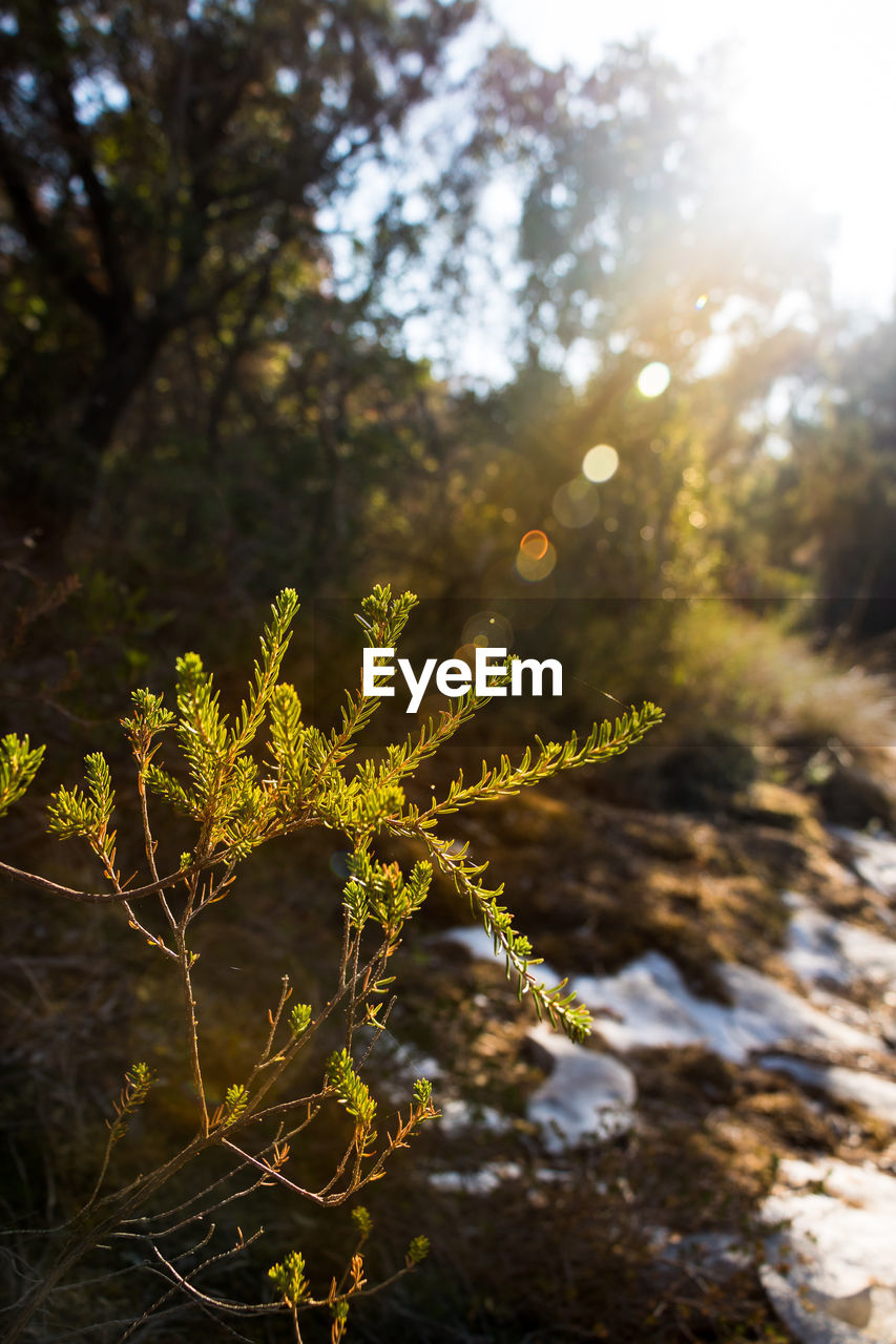 nature, growth, plant, outdoors, beauty in nature, day, tree, no people, sunlight, tranquility, branch, freshness, close-up