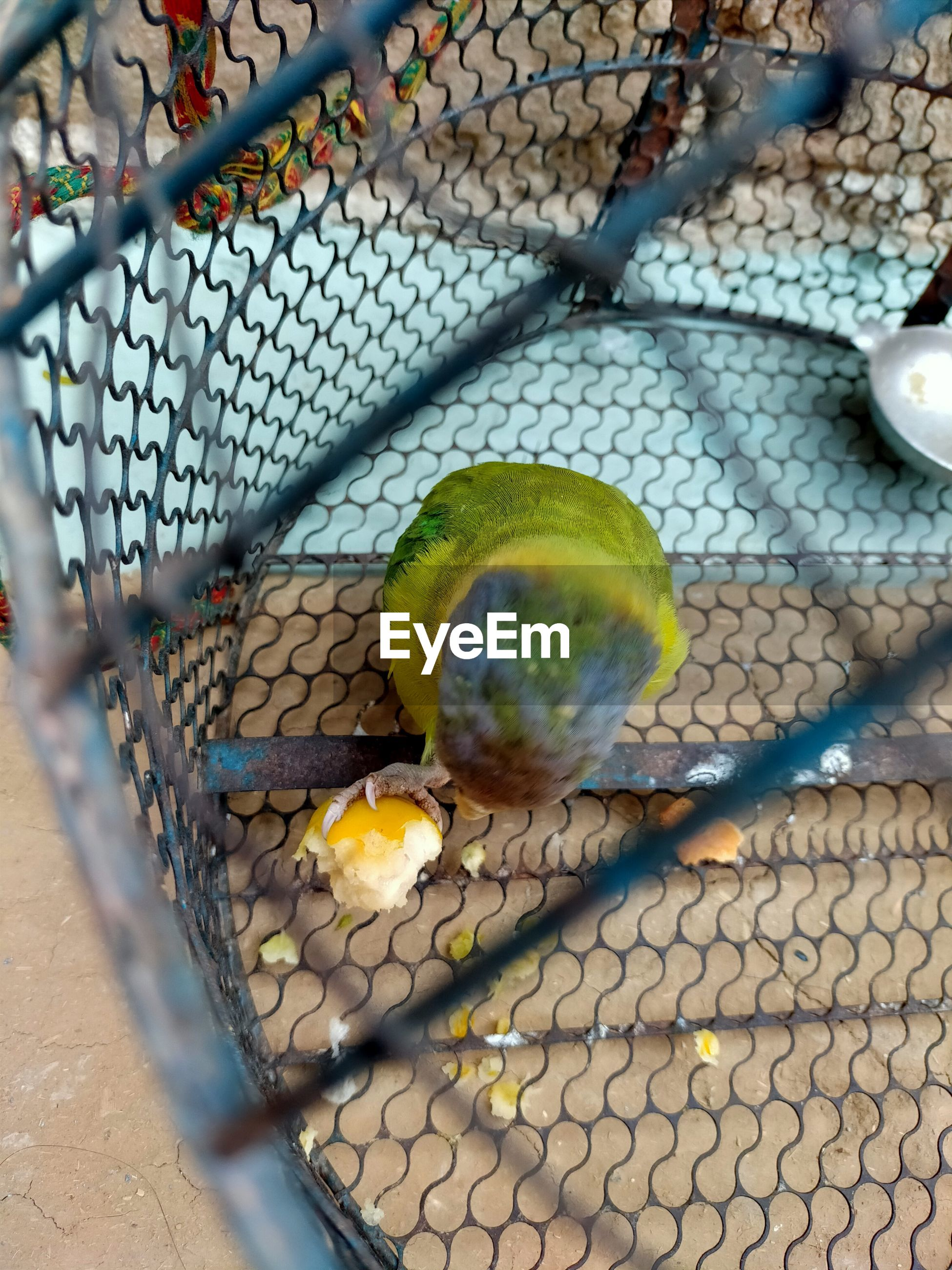 HIGH ANGLE VIEW OF BIRDS ON METAL