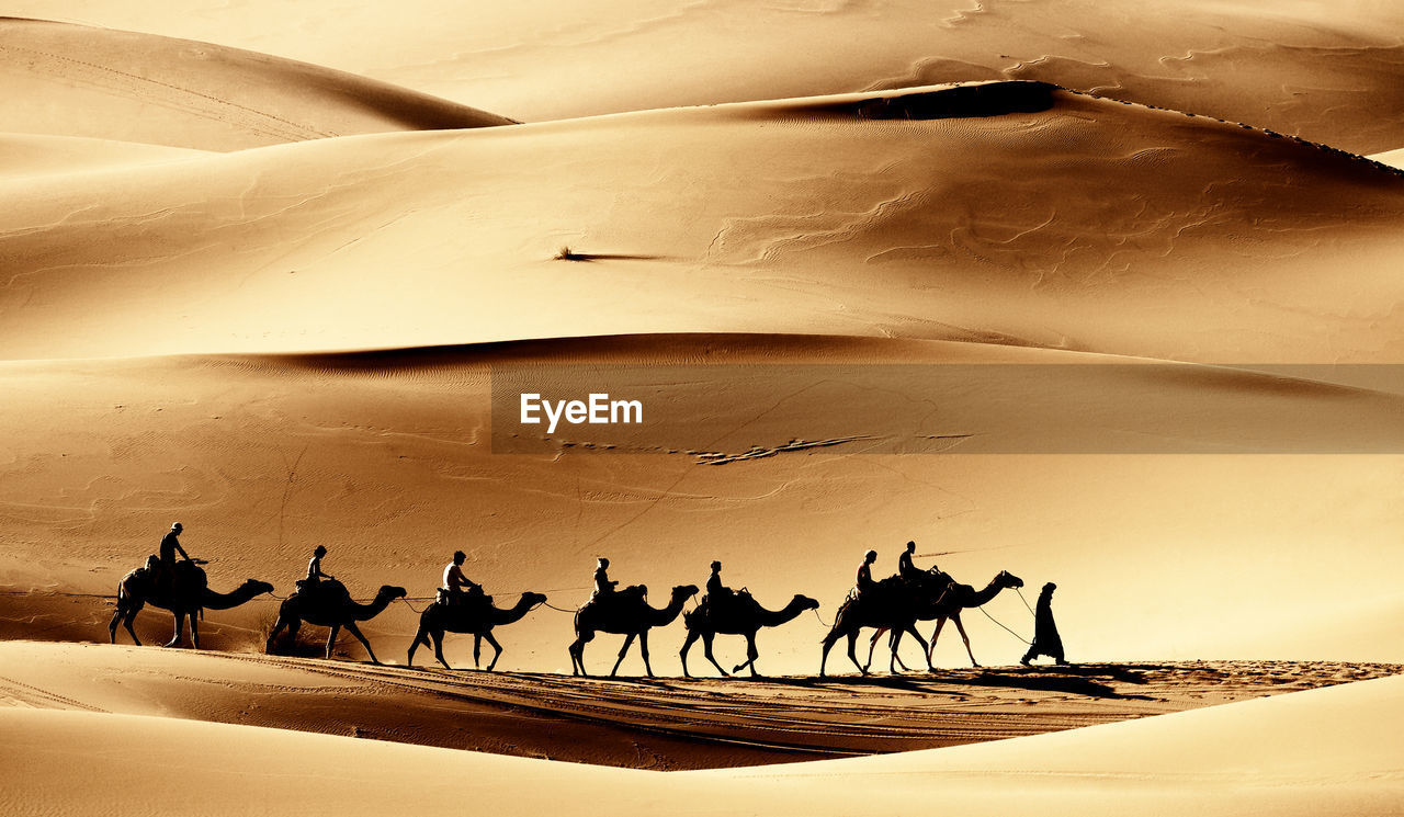 Silhouette Of Men Riding Camels In The Desert