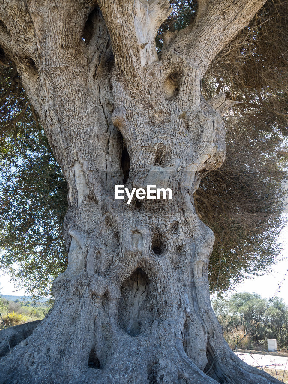 tree, trunk, tree trunk, plant, textured, day, no people, nature, rough, close-up, pattern, low angle view, outdoors, growth, land, bark, natural pattern, tranquility, beauty in nature, hole