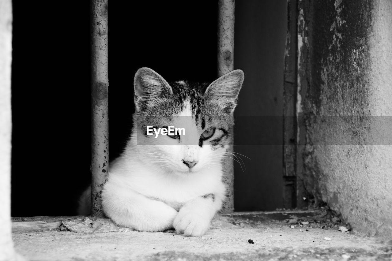 Close-up of cat on window