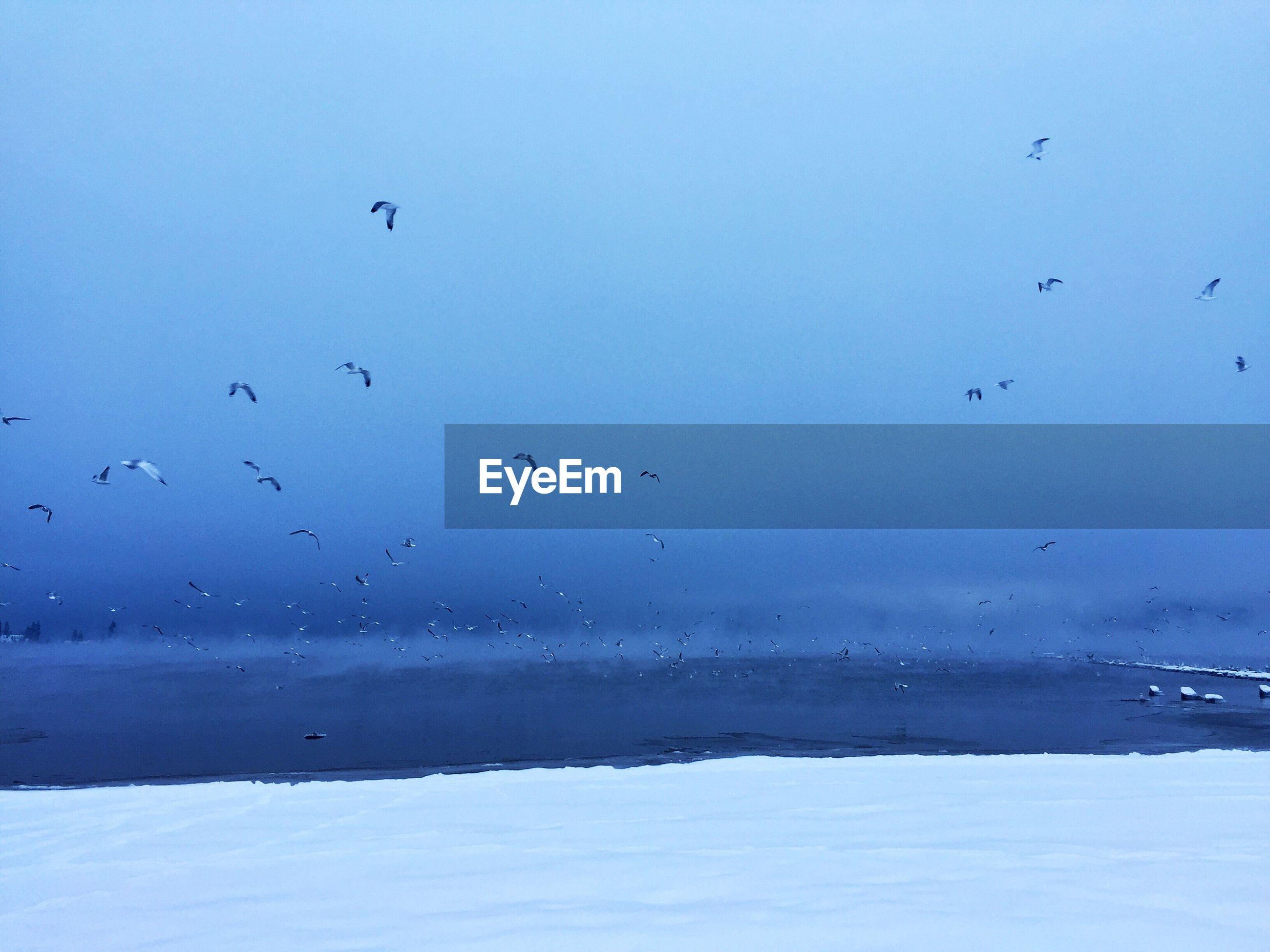 Birds flying over sea against blue sky