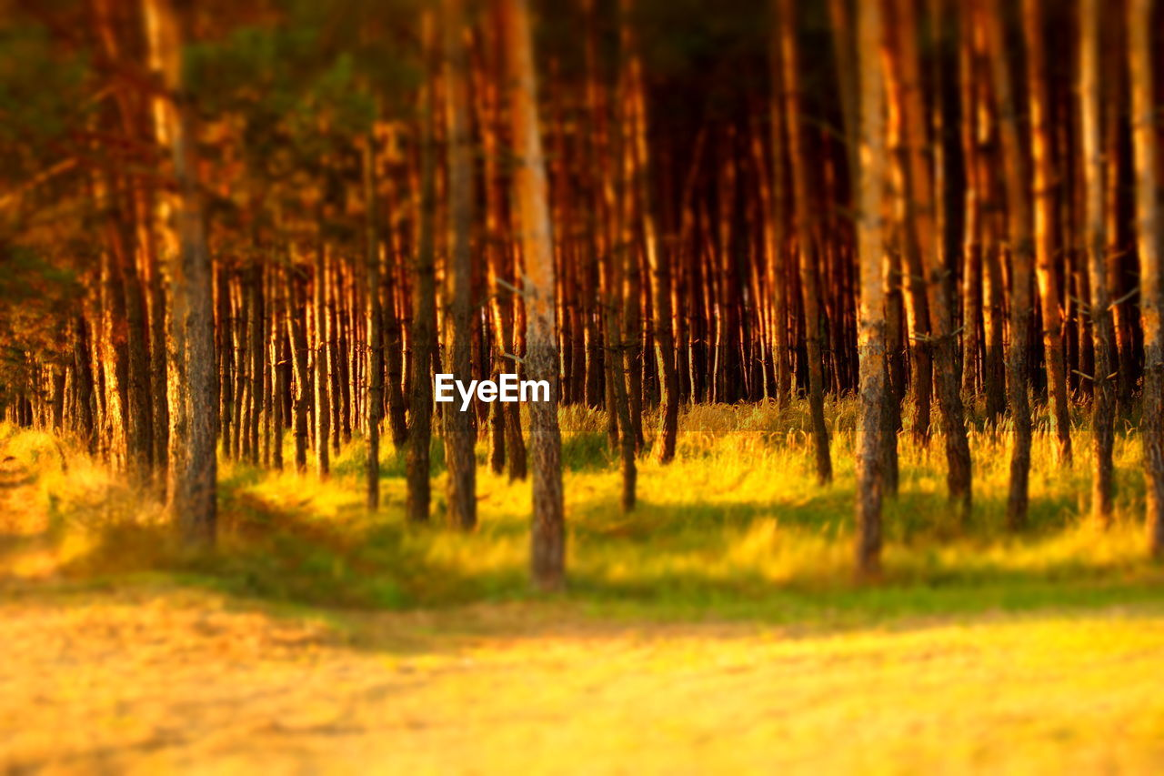 nature, forest, tree, tranquility, no people, growth, tree trunk, beauty in nature, landscape, outdoors, close-up, day