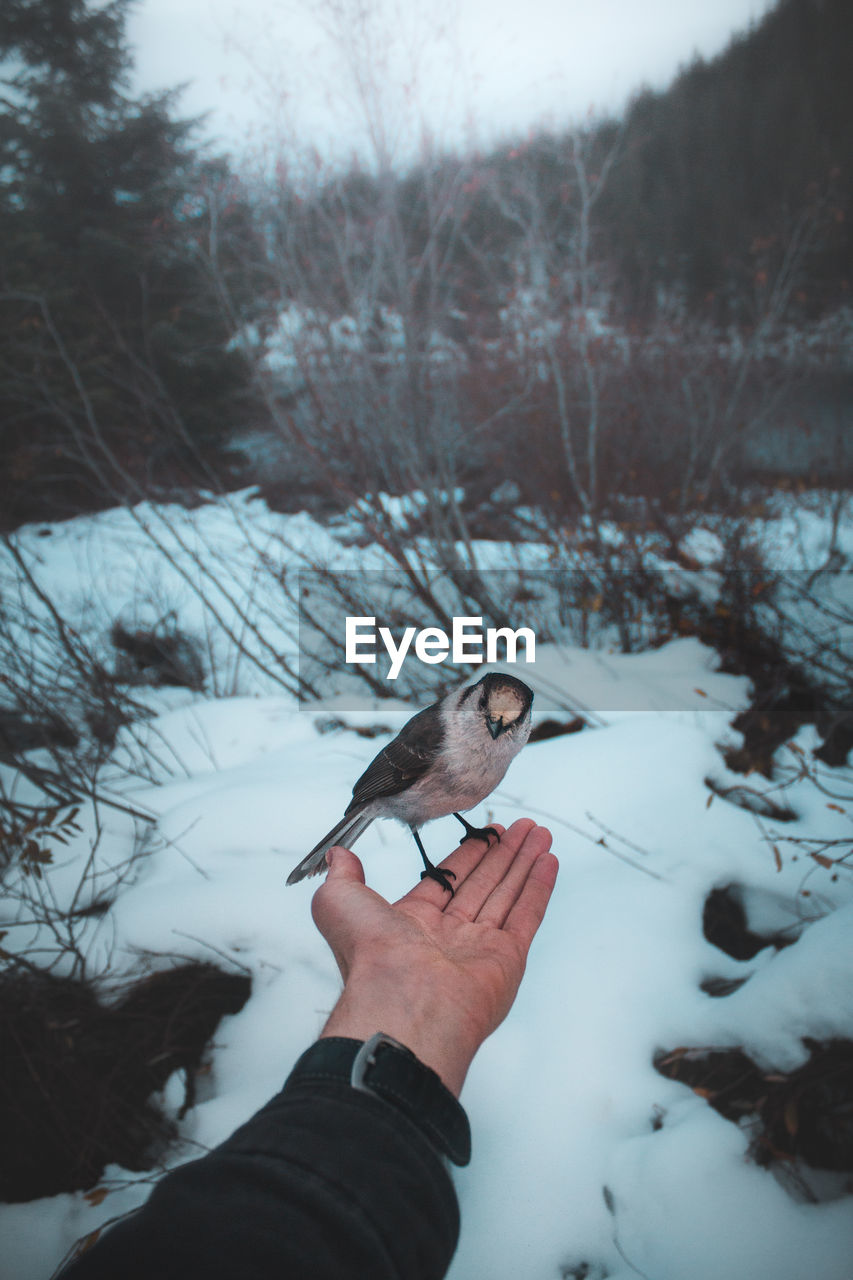 Bird Perching On Hand Of Man Against Bare Trees During Winter