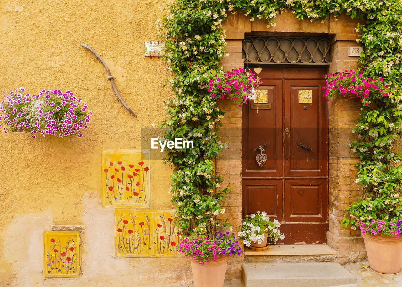 flowering plant, plant, flower, entrance, door, architecture, building exterior, nature, building, built structure, potted plant, no people, house, wood - material, day, closed, growth, flower pot, residential district, wall - building feature, outdoors
