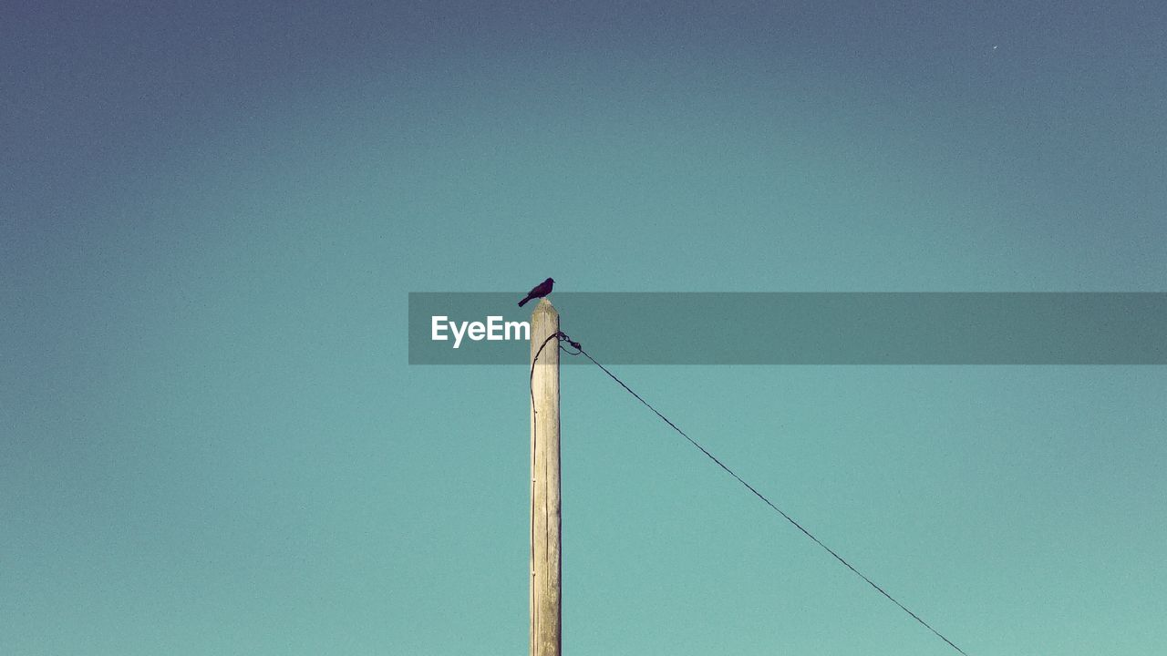 bird, vertebrate, sky, animal wildlife, animals in the wild, copy space, clear sky, one animal, blue, animal, animal themes, perching, no people, low angle view, pole, nature, day, electricity, cable, outdoors, wooden post, power supply, turquoise colored, telephone line