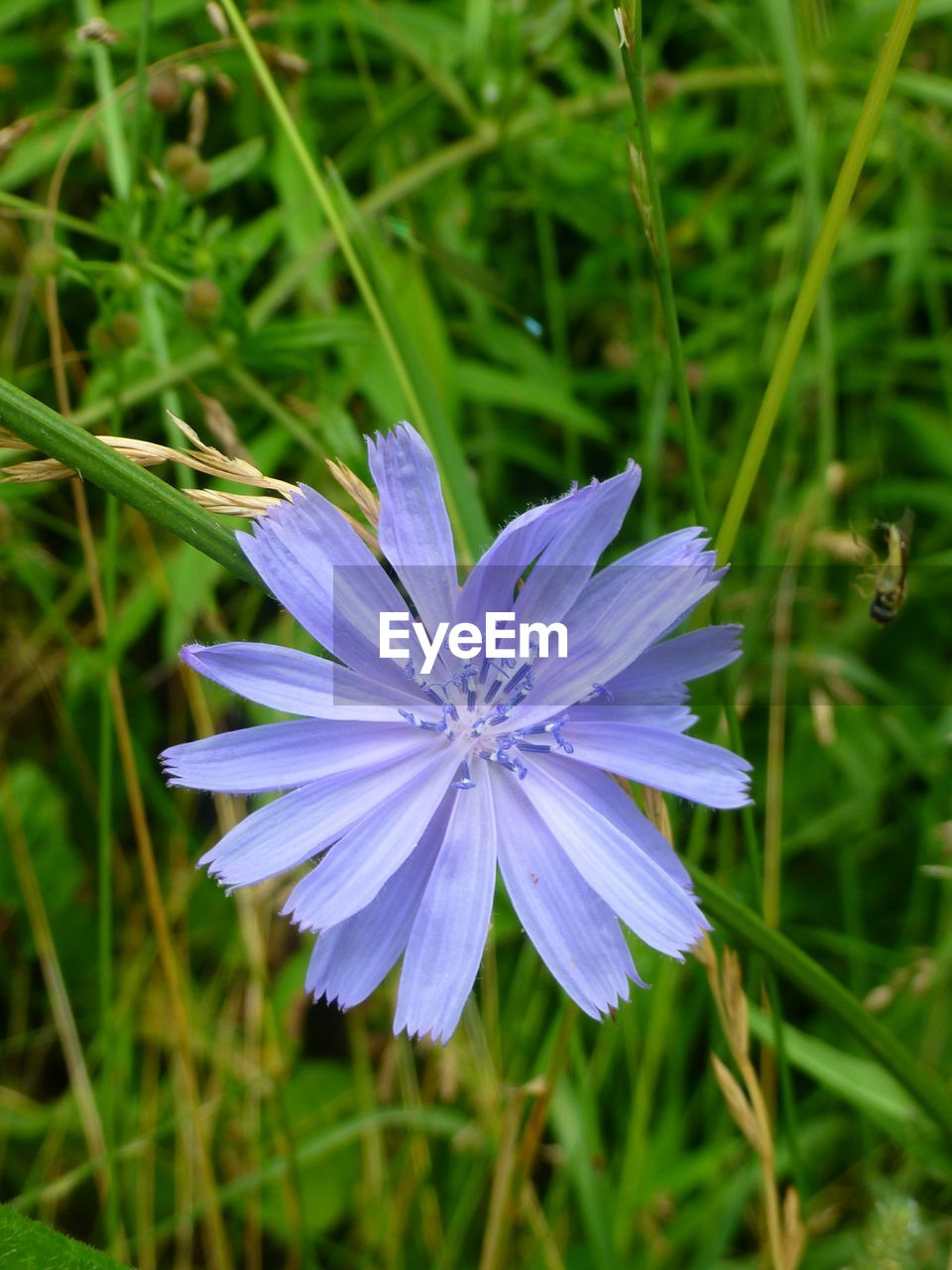 flower, growth, nature, purple, beauty in nature, petal, fragility, individuality, plant, blooming, no people, freshness, flower head, outdoors, grass, close-up, day