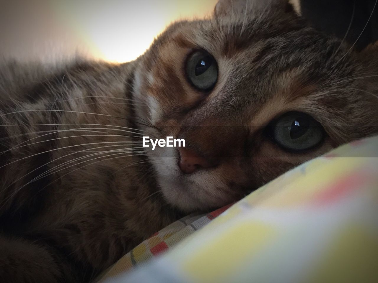 pets, one animal, domestic cat, domestic animals, animal themes, mammal, looking at camera, whisker, feline, indoors, close-up, portrait, no people, day