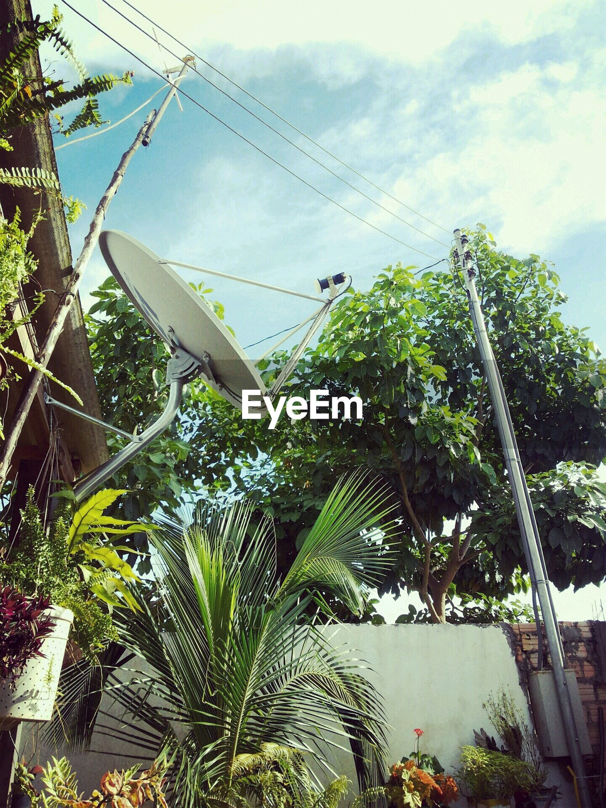 sky, growth, low angle view, plant, green color, tree, nature, cloud - sky, day, leaf, cloud, outdoors, tranquility, palm tree, beauty in nature, no people, growing, sunlight, cloudy, water