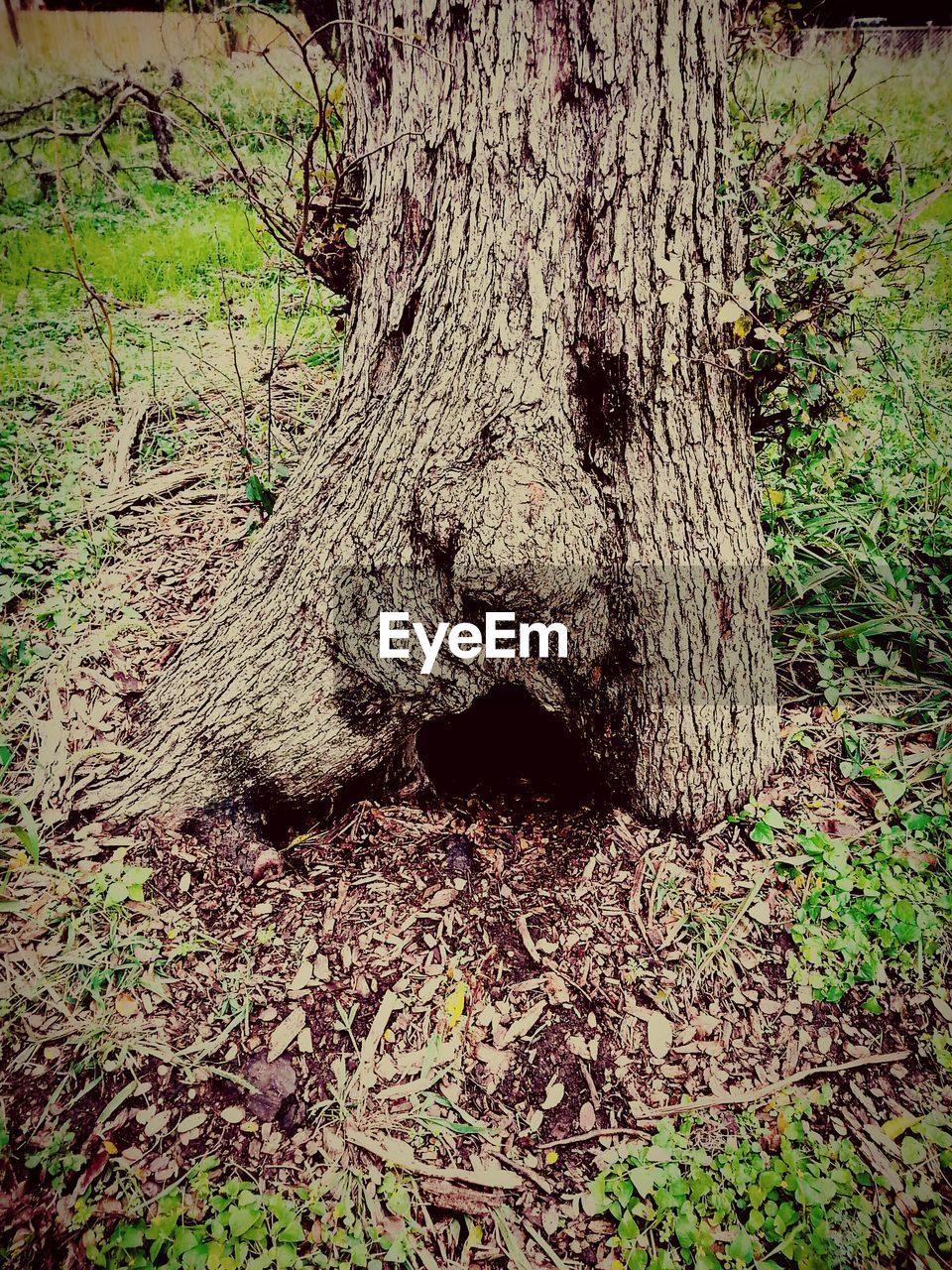 tree trunk, tree, nature, forest, day, no people, outdoors, tranquility, growth, beauty in nature, close-up