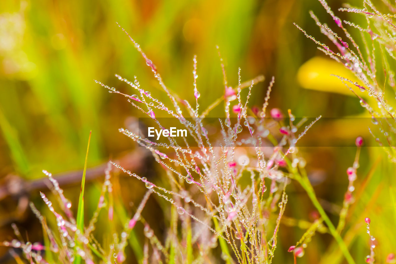 plant, growth, beauty in nature, flower, fragility, flowering plant, freshness, vulnerability, close-up, drop, wet, nature, selective focus, no people, water, focus on foreground, day, outdoors, petal, dew, raindrop