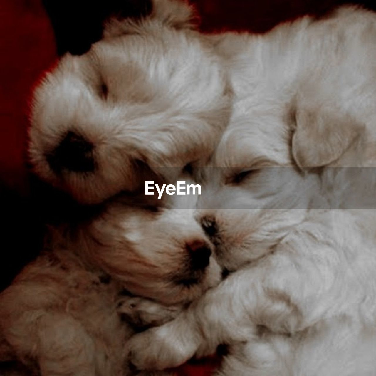 pets, domestic animals, animal themes, sleeping, animal hair, eyes closed, one animal, cute, indoors, no people, domestic cat, dog, lying down, close-up, mammal, day, persian cat