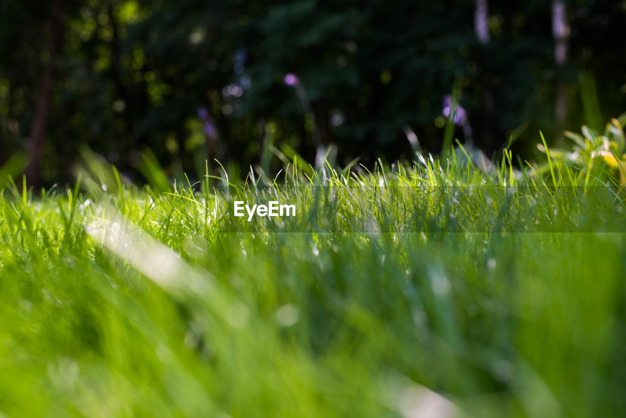 selective focus, plant, grass, growth, green color, nature, land, field, day, beauty in nature, tranquility, outdoors, close-up, sunlight, no people, freshness, environment, vulnerability, fragility, green, blade of grass, surface level, dew