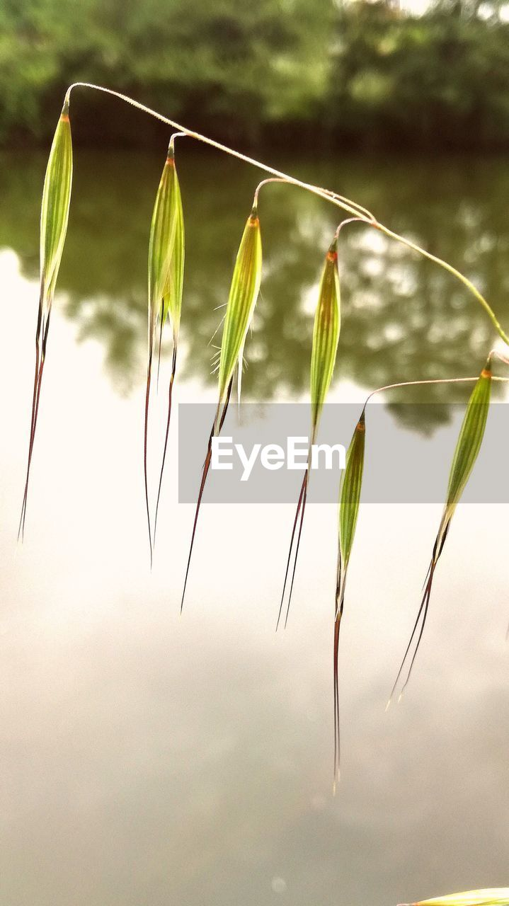 growth, plant, nature, beauty in nature, focus on foreground, close-up, no people, day, fragility, outdoors, green color, freshness, tranquility, flower