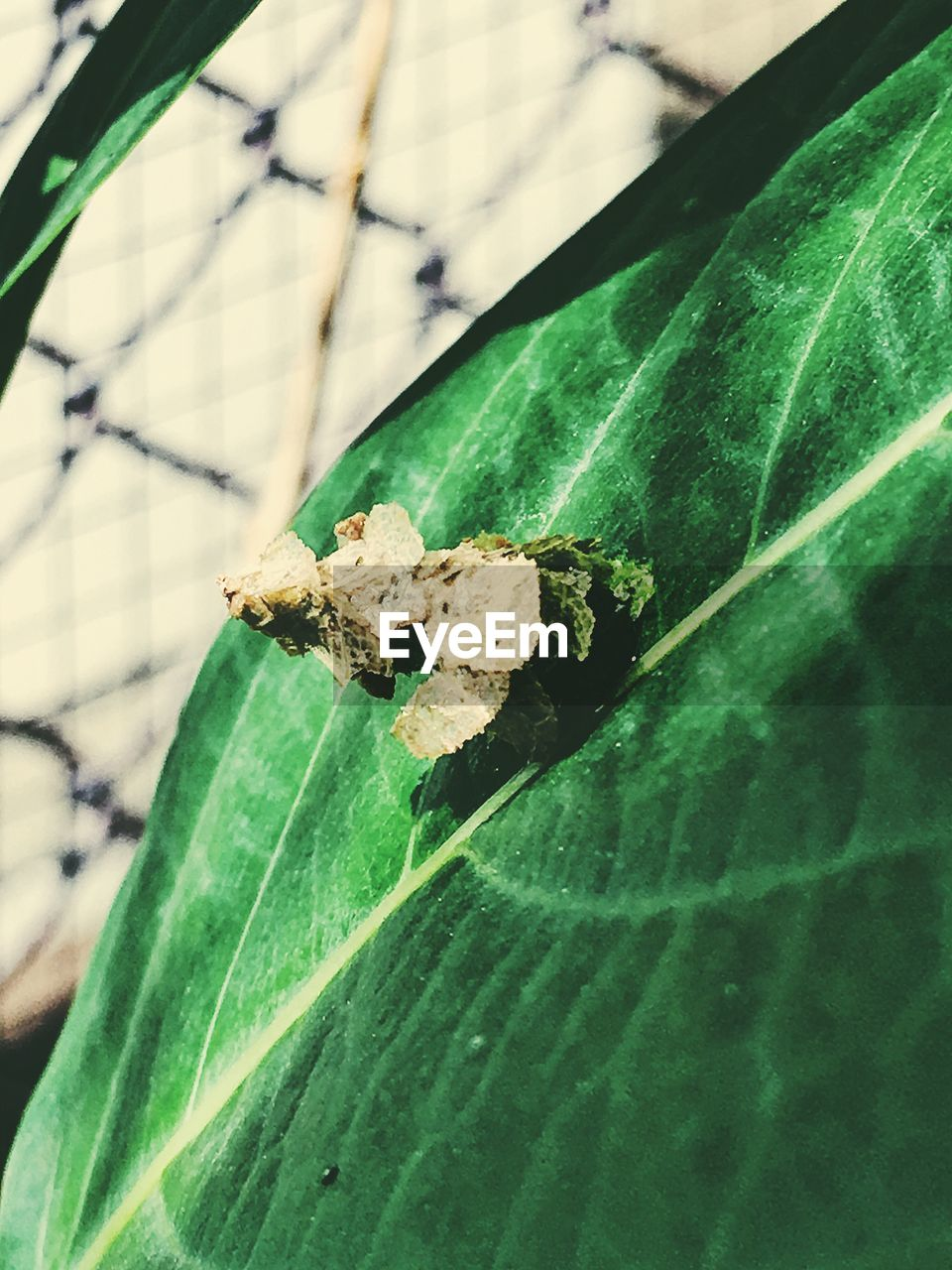 leaf, green color, insect, one animal, animals in the wild, animal themes, close-up, day, no people, outdoors, plant, nature, animal wildlife, fragility