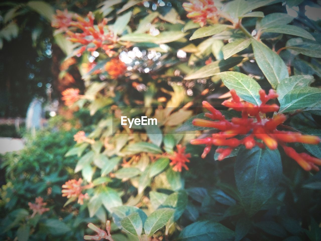 leaf, growth, nature, red, no people, day, tree, plant, outdoors, beauty in nature, freshness, close-up