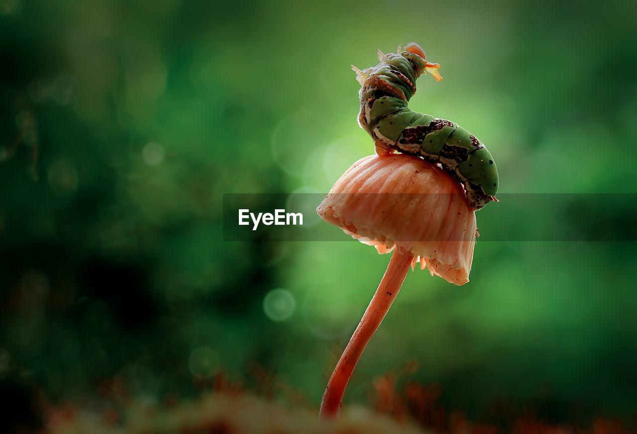Close-up of caterpillar on mushroom