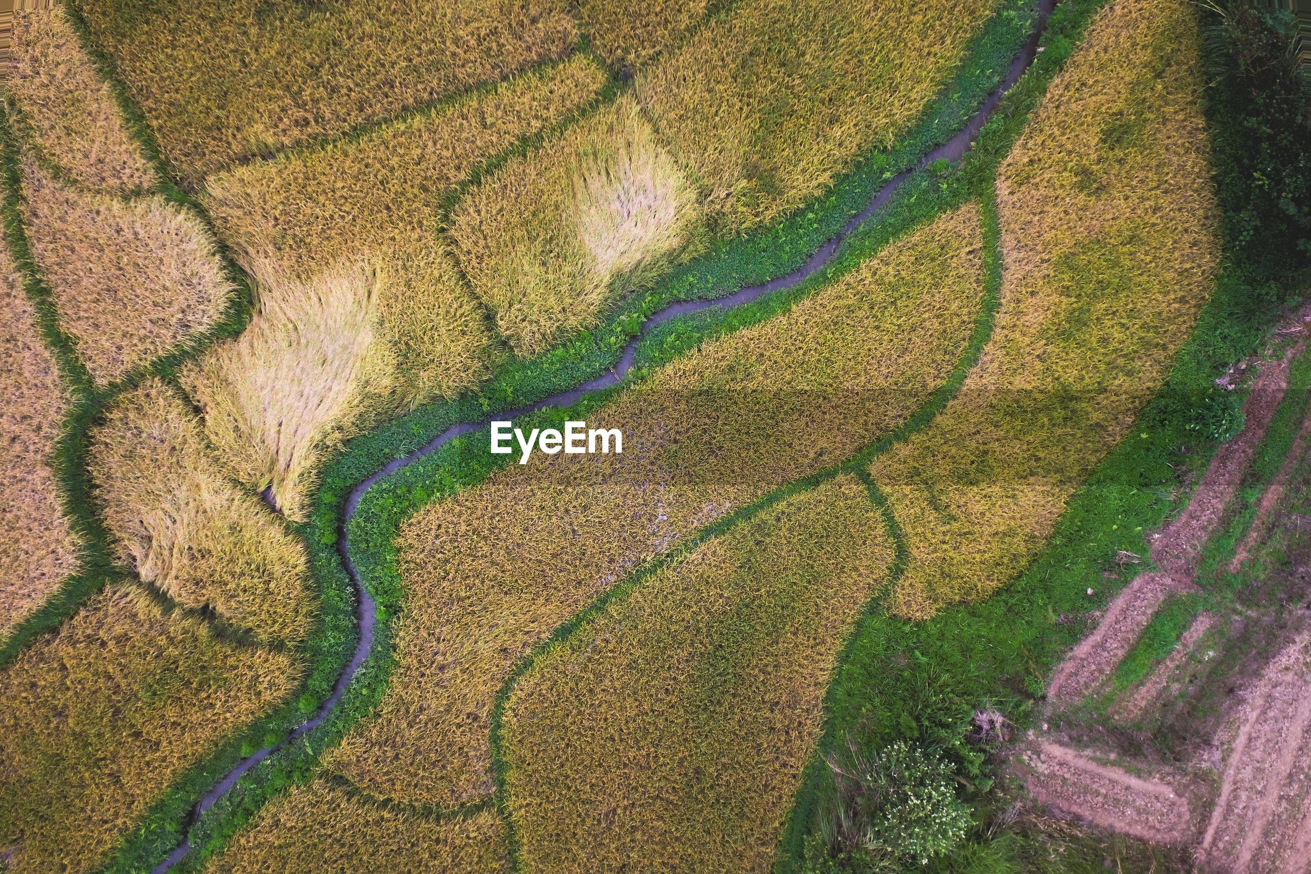 FULL FRAME SHOT OF AGRICULTURAL LAND