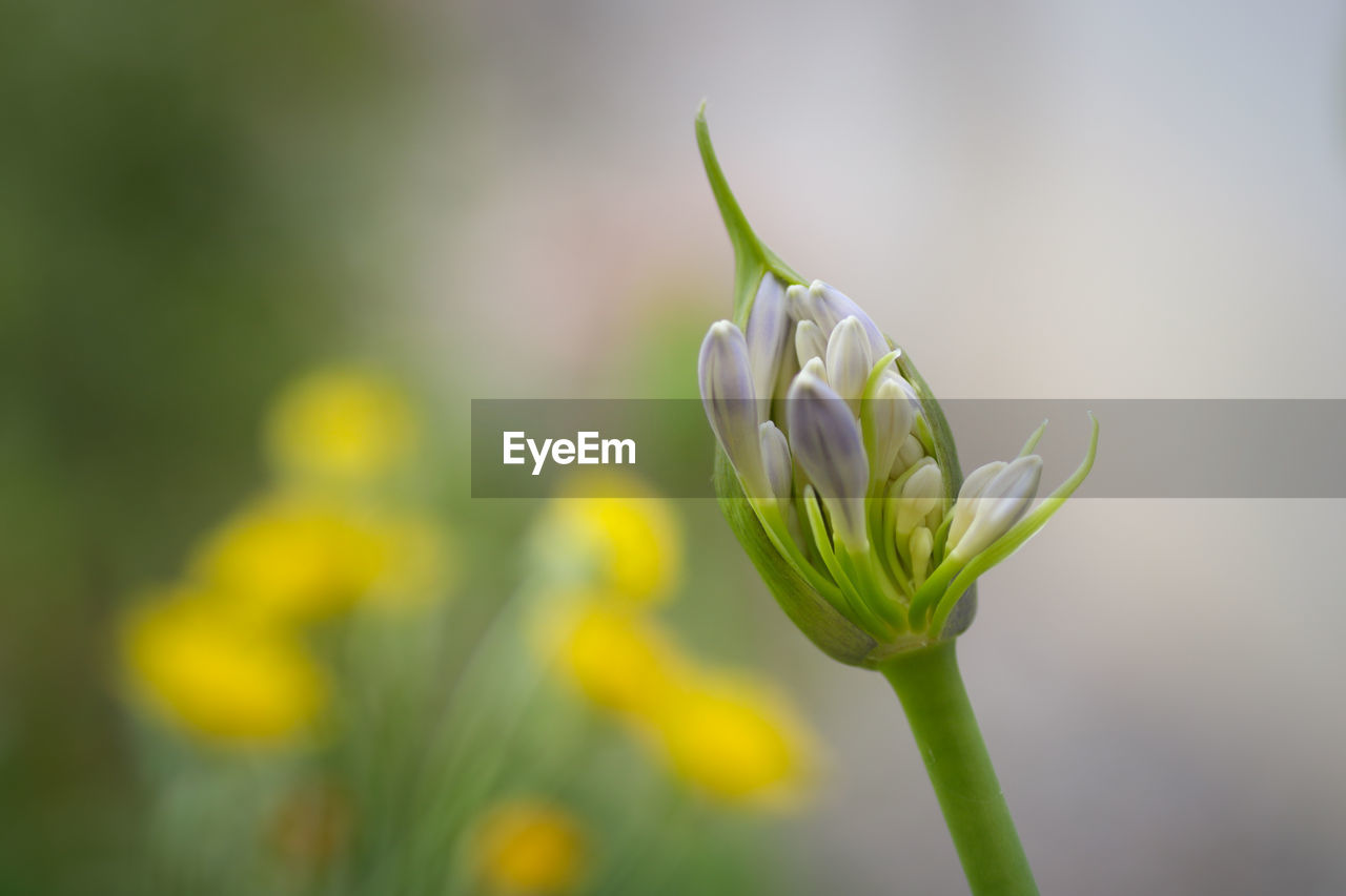 flower, flowering plant, growth, beauty in nature, plant, vulnerability, fragility, freshness, close-up, focus on foreground, bud, nature, petal, beginnings, green color, day, no people, new life, flower head, inflorescence, outdoors, springtime, sepal