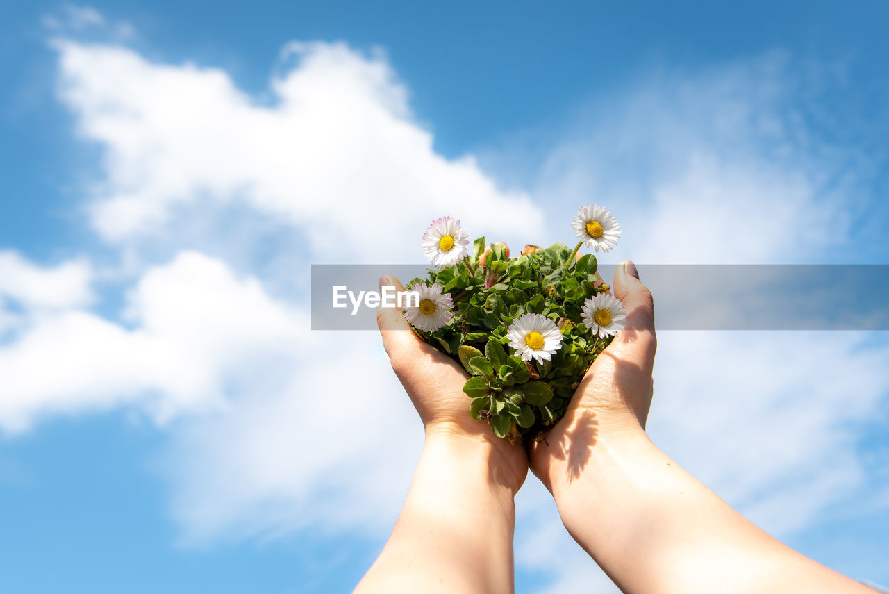MIDSECTION OF PERSON HOLDING FLOWERING PLANT AGAINST CLOUDY SKY