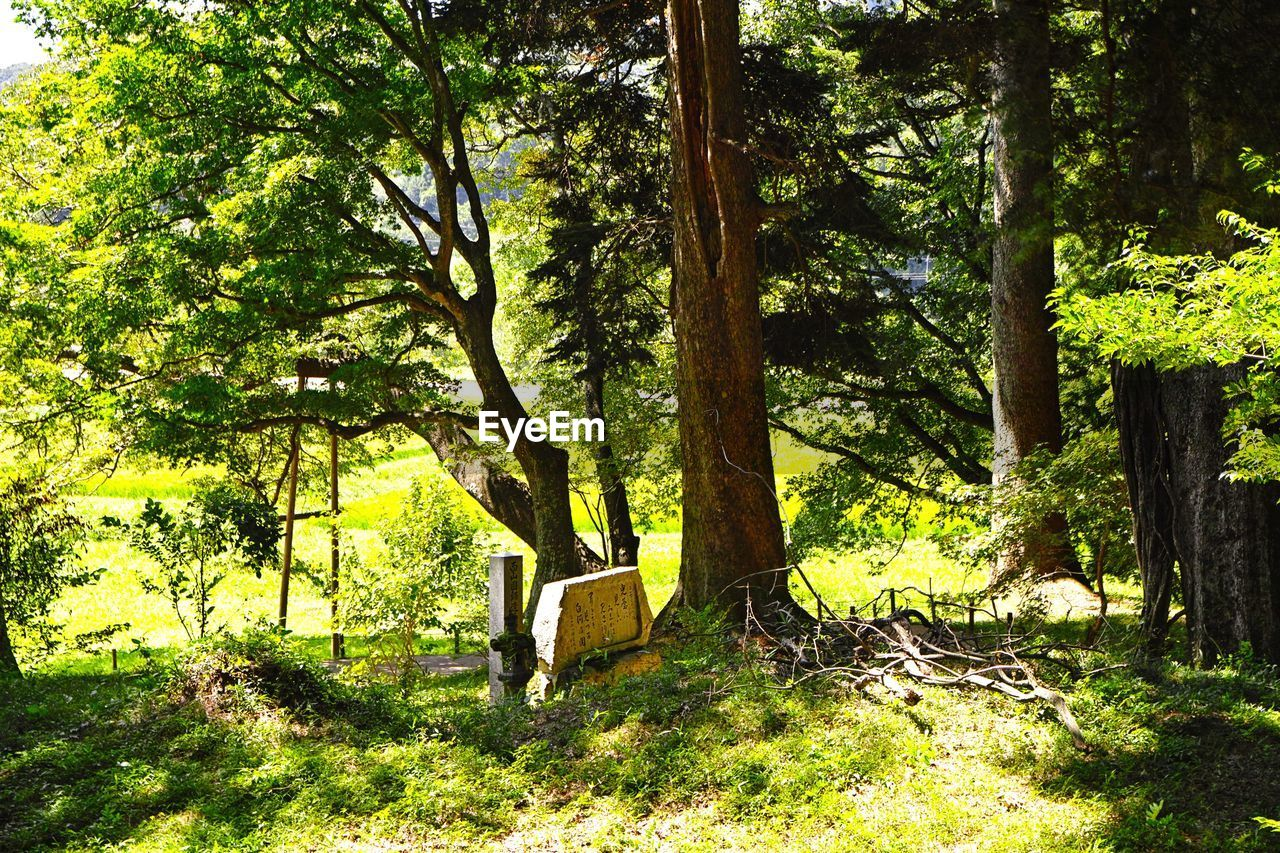 tree, plant, nature, tree trunk, growth, trunk, land, green color, forest, tranquility, day, sunlight, beauty in nature, no people, grass, outdoors, tranquil scene, scenics - nature, shadow, environment, woodland