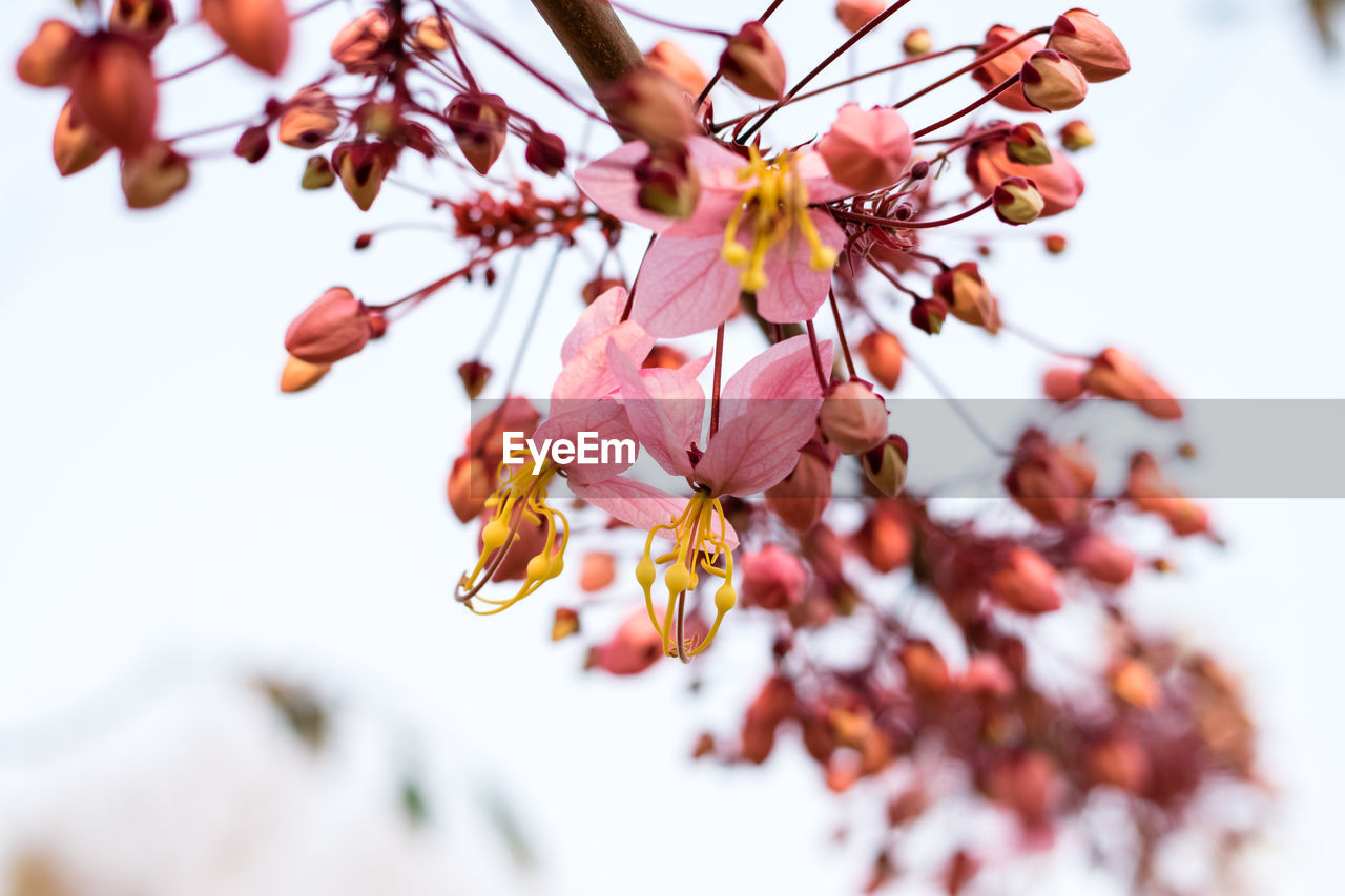 flower, flowering plant, plant, beauty in nature, growth, close-up, fragility, vulnerability, freshness, tree, selective focus, branch, no people, focus on foreground, day, petal, nature, flower head, springtime, blossom, pollen, cherry blossom, cherry tree
