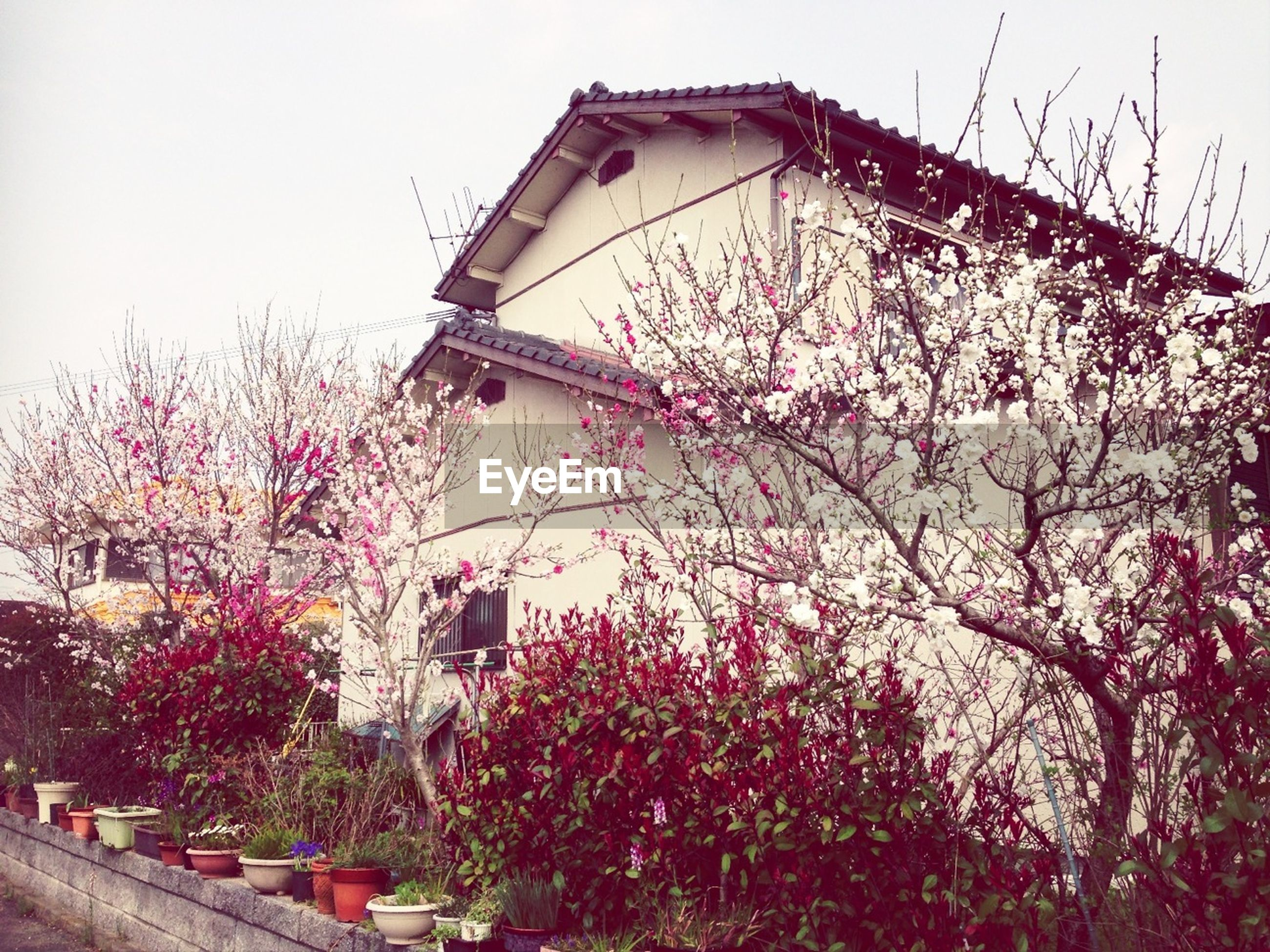 building exterior, architecture, built structure, flower, low angle view, tree, clear sky, growth, sky, branch, pink color, day, fragility, nature, freshness, outdoors, no people, plant, city, building