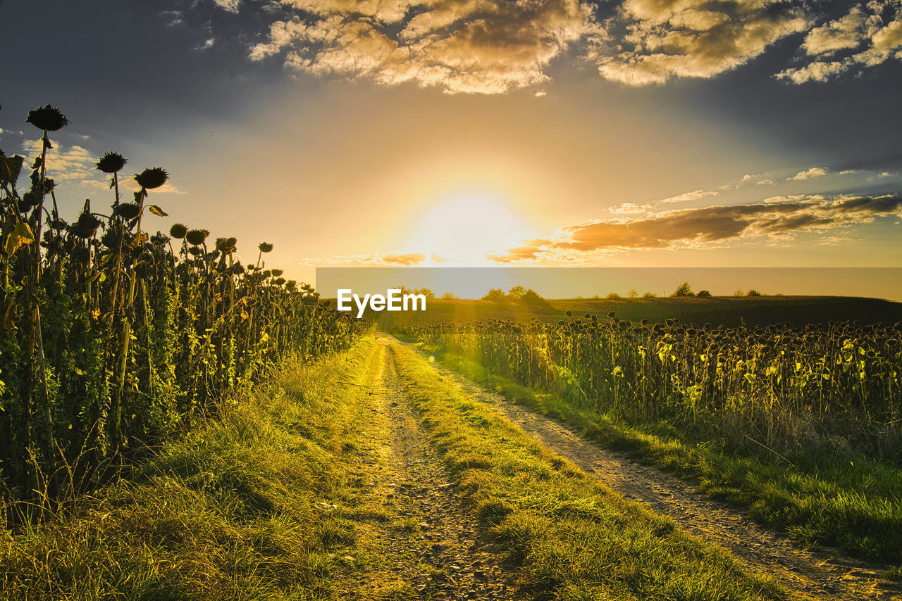 sky, sunset, beauty in nature, scenics - nature, plant, field, growth, land, tranquility, tranquil scene, landscape, nature, rural scene, agriculture, environment, cloud - sky, orange color, sunlight, crop, no people, sun, outdoors, winemaking, plantation, bright
