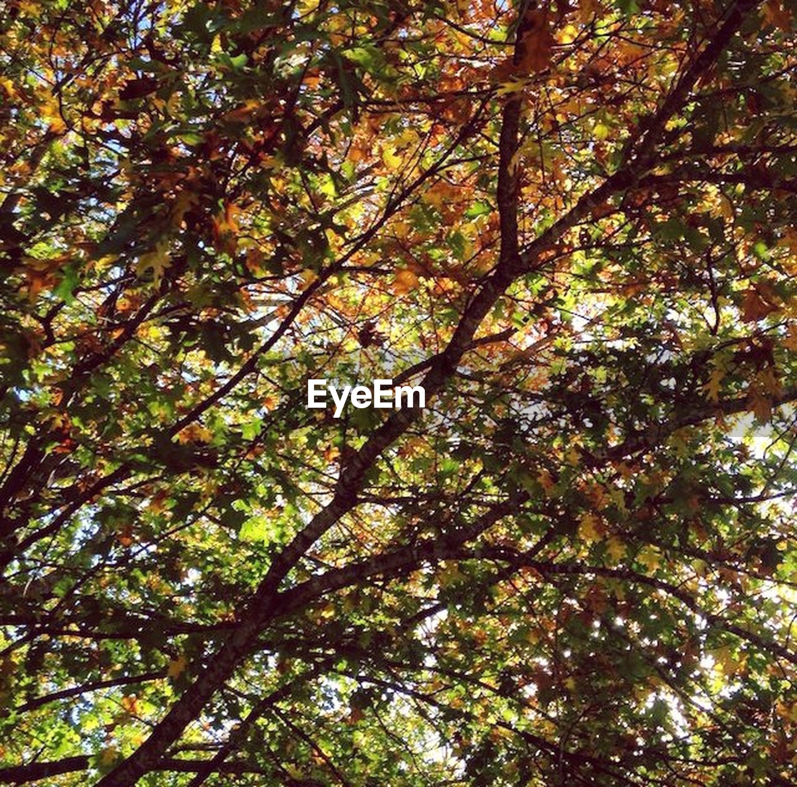 tree, low angle view, branch, growth, nature, tranquility, green color, beauty in nature, full frame, backgrounds, lush foliage, forest, leaf, day, tree trunk, sky, outdoors, no people, scenics, autumn